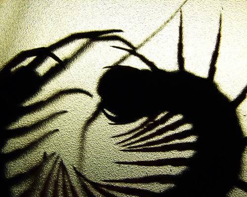 bugs contest winners